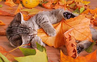 Осенние проблемы домашних животных