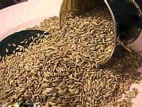 Семена петрушки, 100 гр