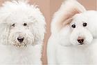 Профессиональная машинка для стрижки собак и котов Gemei GM 796, фото 6