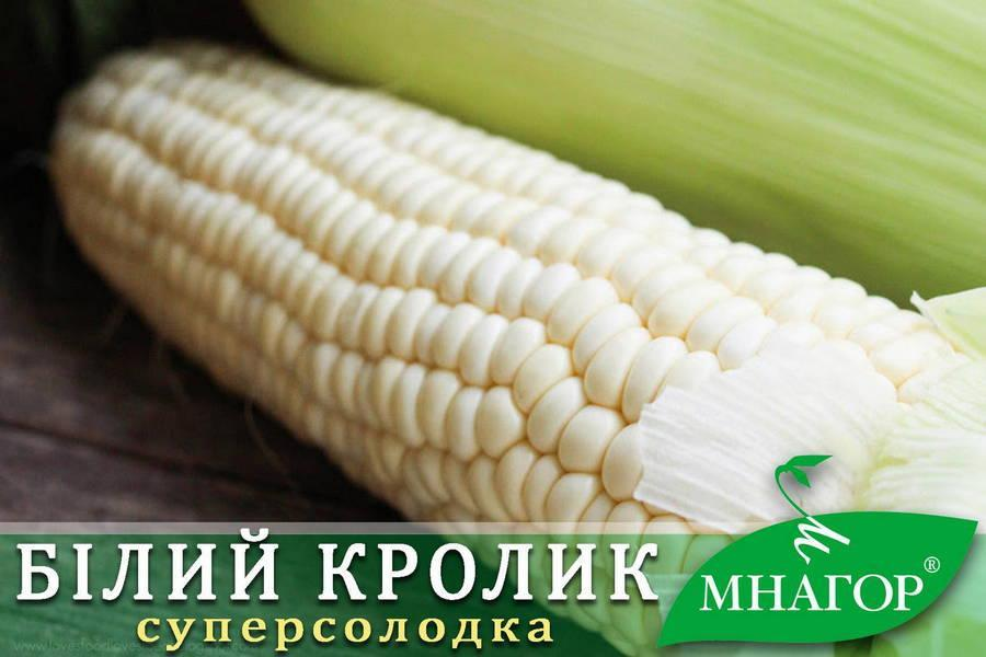 Сахарная кукуруза Белый Кролик F1, Sh2-тип, молочно-белое зерно, 200 семян на 30 м², 78-80 дней