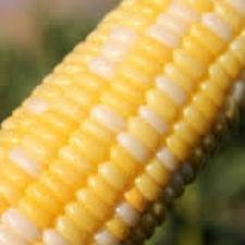 Семена кукурузы Кукс Делайт F1 5 г