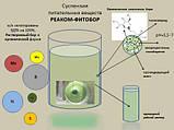 РЕАКОМ - Плюс - ФИТОБОР ( ФІТОБОР ) (подобие WUXAL OILSEED оилсид)  МАСЛЯНИЧНЫЕ подсолнух соя (10л. ведро), фото 2