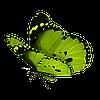 На заказы с 28/09 по 29/10 - По желанию украшение торта ВАФЕЛЬНЫМИ бабочками в подарок!