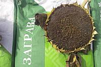 Семена подсолнечника ЗАГРАВА (Экстра), А-Е, ВНИС