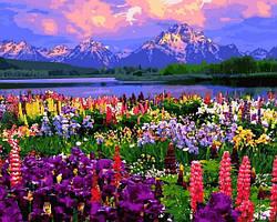 Картины по номерам 40×50 см. Национальный парк Гранд-Титон гора Моран