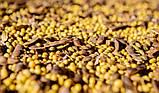 Соевый шрот гранулированный кормовой, фото 3