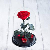 Стабилизированная роза в колбе Lerosh - Premium 33 см,  Красный - ORIGINAL LEROSH, фото 1