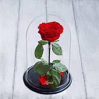 Стабилизированная роза в колбе Lerosh - Lux 33 см,  Красный - ORIGINAL LEROSH, фото 1