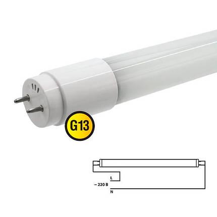 Светодиодная лампа BIOM T8-GL-600-8W NW G13 600мм 4200К (Трубка), фото 2