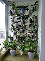 Дерево-3 настенное, подставка для цветов на 17 чаш