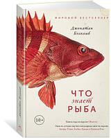 Джонатан Бэлкомб Что знает рыба. Внутренний мир наших подводных собратьев