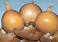 Лук репчатый Банко - Syngenta (Сингента), уп. 250 000 семян