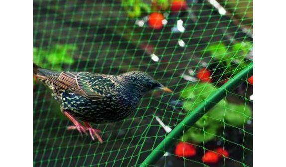 Сетка для птиц. 1м х 100м. Ячейка 12х14мм (Для ограждения птицы и защиты ягод)