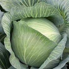 Весовые семена капусты белокачанной Амагер 611 100 грамм,  30 000 сем, Германия