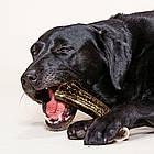 Лакомство для собак NIKKI BARF. Олений рог, цельный ХL 90-130 гр, фото 3