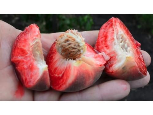 Саженцы персик  Ред Робин средний (однолетка)