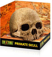 Exo Terra Primate Skull - декорация череп человека.
