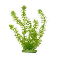 Аквариумное растение Hagen Marina Hornwort, 30см