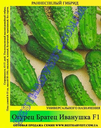 Семена огурца Братец Иванушка F1 5кг (мешок), фото 2