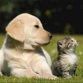 Домашние животные и зоотовары
