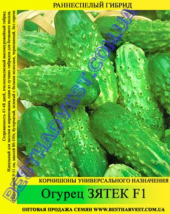 Семена огурца Зятек F1 5кг (мешок), фото 2