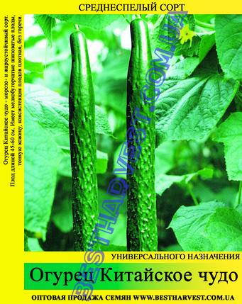 Семена огурца Китайское чудо 0,5кг, фото 2