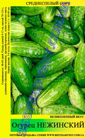 Семена огурца Нежинский 0,5кг