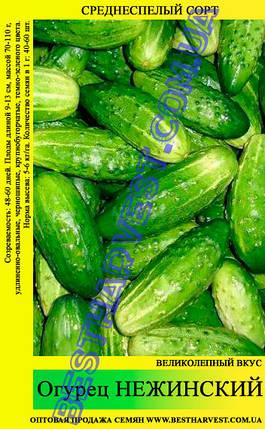 Семена огурца Нежинский 0,5кг, фото 2