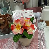 Цветы в горшке