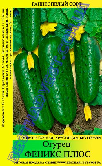 Семена огурца Феникс Плюс 5 кг (мешок)