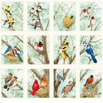 55003 Птицы на ветках (купон). Ткань с птицами. Декоративные ткани. Хлопок для декорирования.