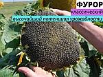 Вибір насіння соняшника на посів у 2020 році.