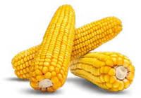 "Семена кукурузы ""Аурум"" (ФАО 320), 2019 г.у. (Маис Черкассы)"