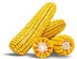 Семена Кукуруза АРГЕНТУМ ФАО 250, (Маис Черкассы), фото 9