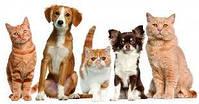 Товары для домашних, любимых животных