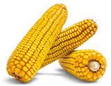 Семена кукурузы ЗДОБУТОК (ФАО 290), 2018 г.у. (Маис Черкассы), фото 5