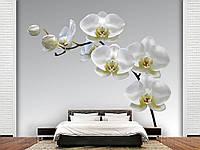 """Флизелиновые Фотообои """"Орхидея (1002365)"""" от производителя за 1 день. Любая картинка и размер. ЭКО-обои"""