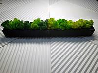 Бетонну кашпо зі стабілізованим мохом, фото 2