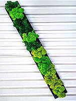 Бетонну кашпо зі стабілізованим мохом, фото 3
