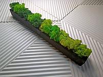 Бетонну кашпо зі стабілізованим мохом, фото 4