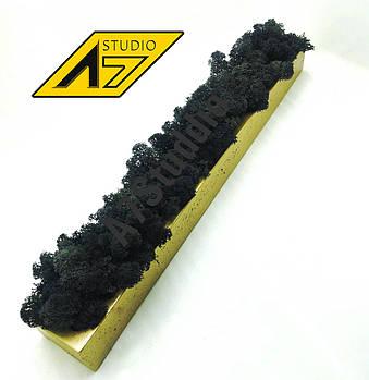 Стабилизированный мох в кашпо Gold-Black