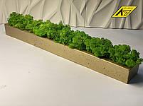 Стабилизированный мох в кашпо Gold-Green moss decor, фото 2