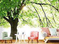 """Флизелиновые Фотообои """"Дерево (1002477)"""" от производителя за 1 день. Любая картинка и размер. ЭКО-обои"""