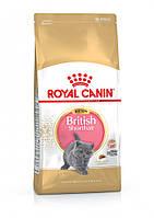 Сухой корм Royal Canin British Shorthair Kitten для котят породы британская короткошерстная до 12 месяцев 10 кг