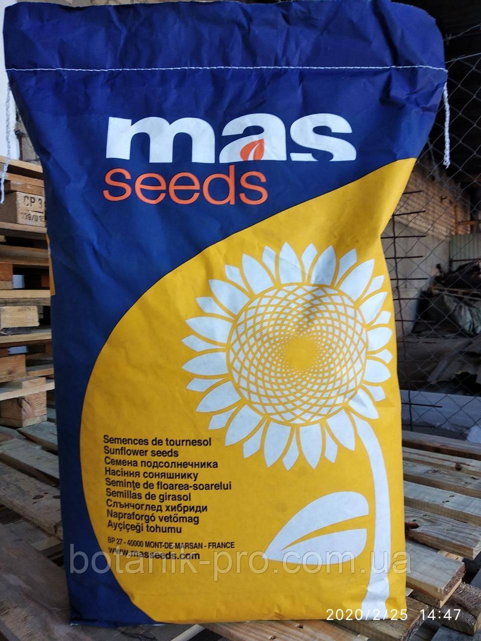 Семена подсолнечника MAS 85.SU под Гранстар