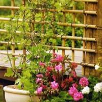 Новые опоры для растений уже в нашем интернет-магазине