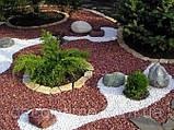 Гравій кольоровий (білий) декоративний для саду , пофарбована річкова галька (4566745345), фото 5
