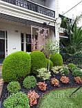 Гравій кольоровий (білий) декоративний для саду , пофарбована річкова галька (4566745345), фото 8