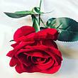 Искусственная роза ( 65 см), фото 4