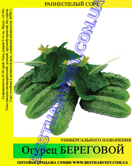Семена огурца Береговой 5 кг (мешок)